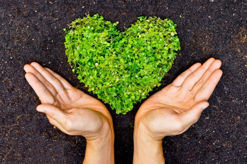 Hands Holding Heart of Herbs